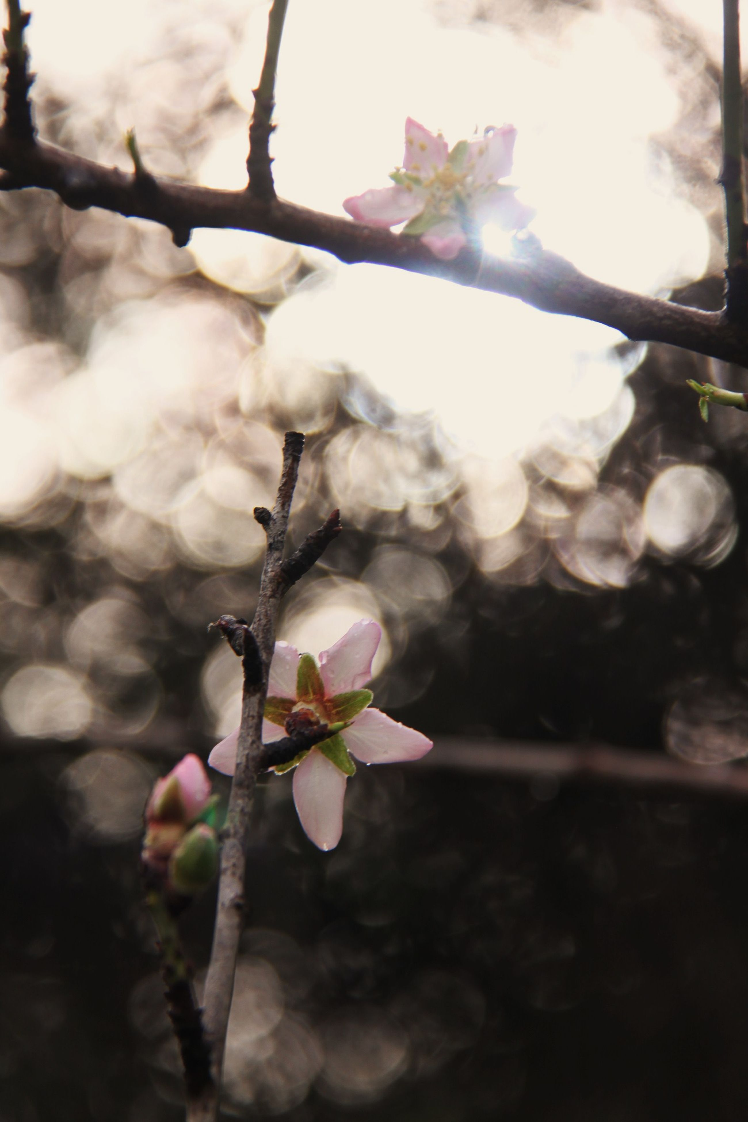 growth, nature, flower, twig, fragility, plant, no people, beauty in nature, outdoors, freshness, close-up, branch, focus on foreground, tree, day, springtime, flower head