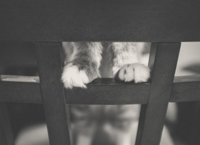 Better View Black And White Chair Cute Kitten Paws Peeking Thunder Bay