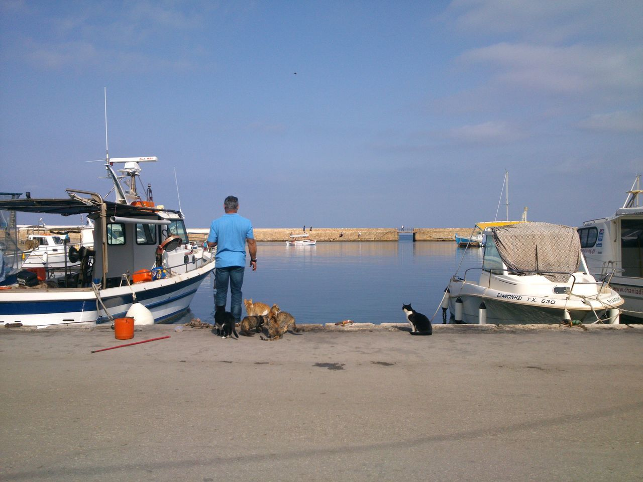Fishing Adult Cats Chania Crete Day Fish Fisherman Greece Greek Fisherman Harbor Men Moored Nature Nautical Vessel Occupation One Man Only One Person Outdoors People Real People Sea Sky Water Working