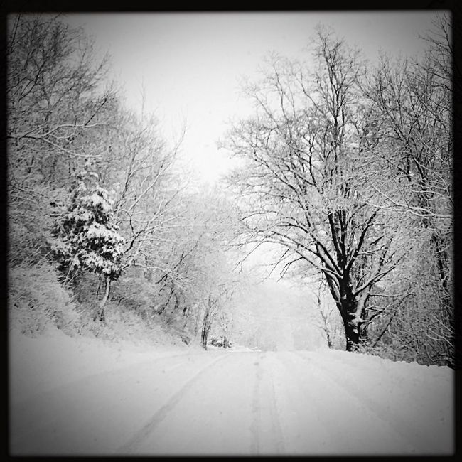 Trees Winter In Wisconsin Wintertime Winter Tree_collection  TreePorn Tree Snowing ❄ Snow Trees Snow Covered Snowy Snow ❄ Snowing Snow Cold Winter ❄⛄ Ice Road White Snow❄⛄ Snow Covered Trees Street Snow White Snow Storm Winter Trees Winter Wonderland