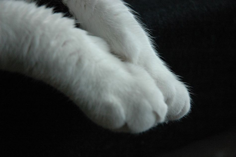 Pets Close-up Animal Leg Day Cat EyeEmNewHere White Color Domestic Animals Animal Themes Kittylove Fur Fluffy