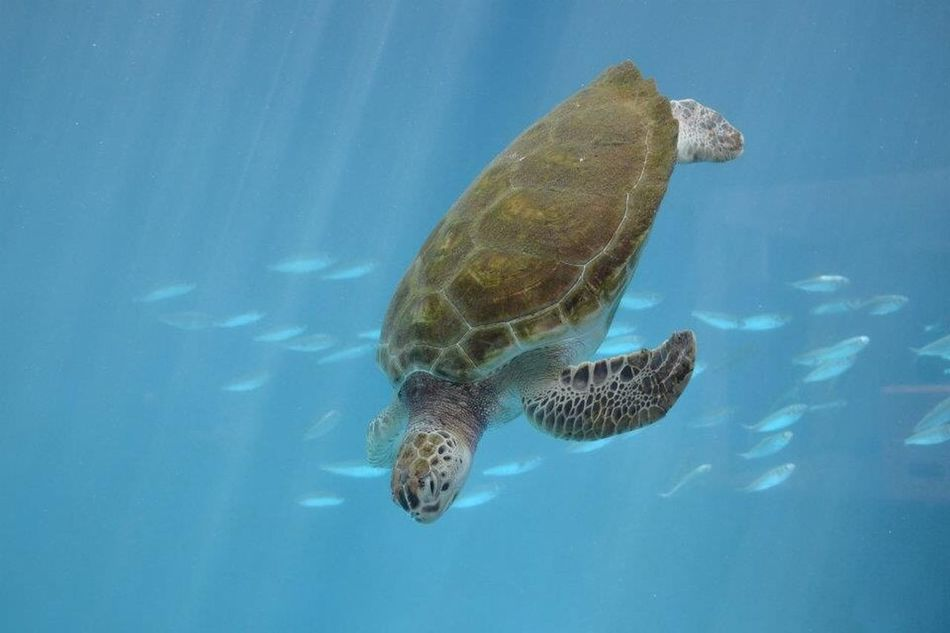 Beautiful stock photos of turtle, Animal Themes, Animals In The Wild, Clear, Close-Up