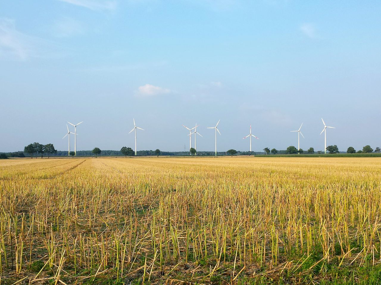 Windräder Abgeerntet Harvested Wind Turbine Wind Power Wind Energy Harvested Field Abgeerntetes Feld Blue Sky Beautiful Combination Showcase July Ladyphotographerofthemonth Pitoresque Hello World Beautiful View Weite Flachland Flat Landscape Stoppelfeld