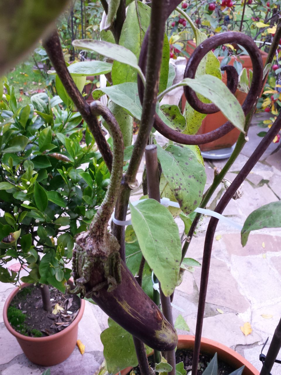 growth, plant, potted plant, day, leaf, no people, nature, outdoors, tree, close-up, beauty in nature, freshness, greenhouse