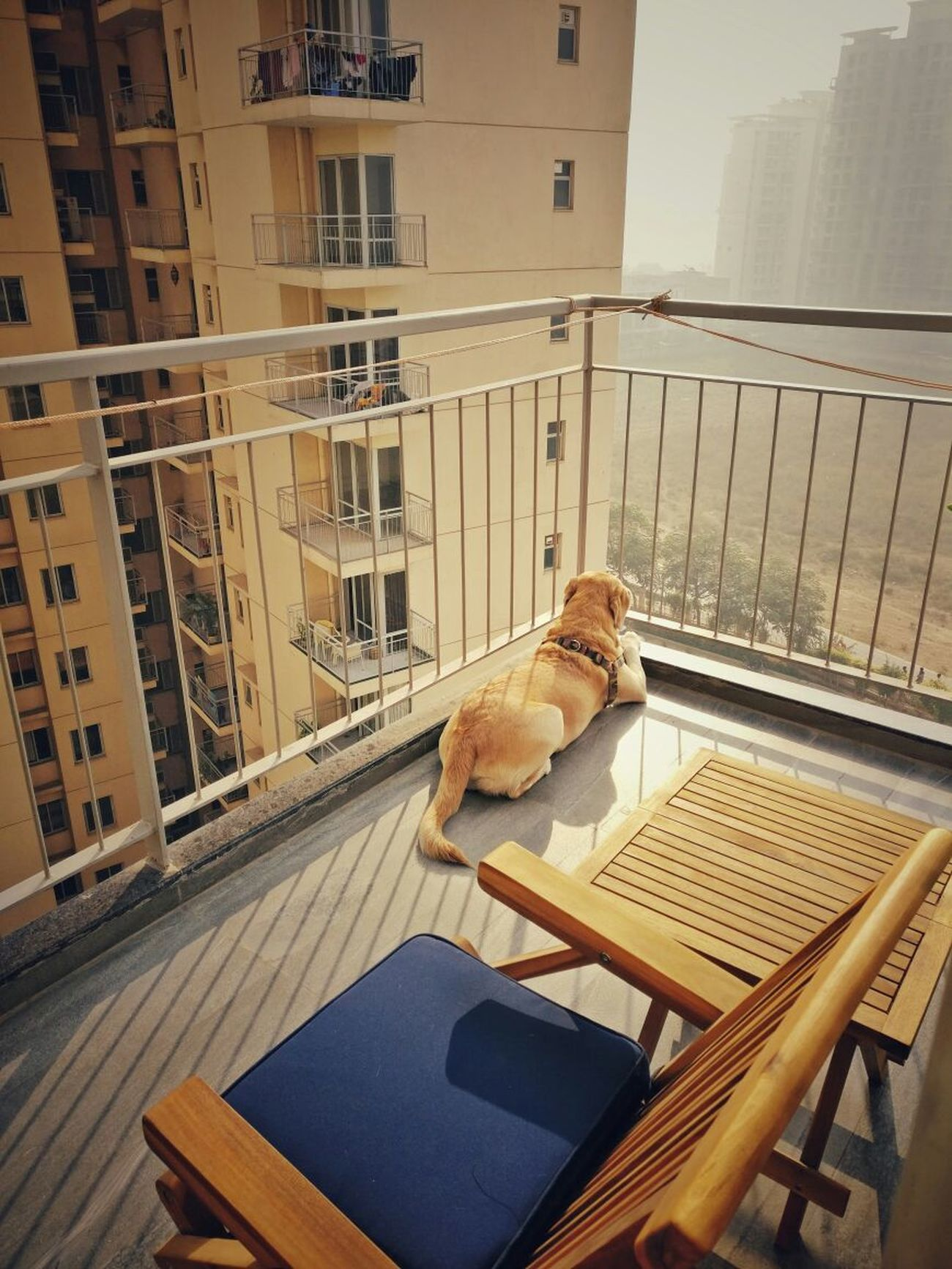 Animal Themes EyeEmNewHere Architecture Dogslife Calmness Summer Coming Sunlight Sunshine EyeEm Animal Lover EyeEm Best Shots Dogslife Dogs Of EyeEm Archtectural Element The Week On EyeEm The Architect - 2017 EyeEm Awards Live For The Story