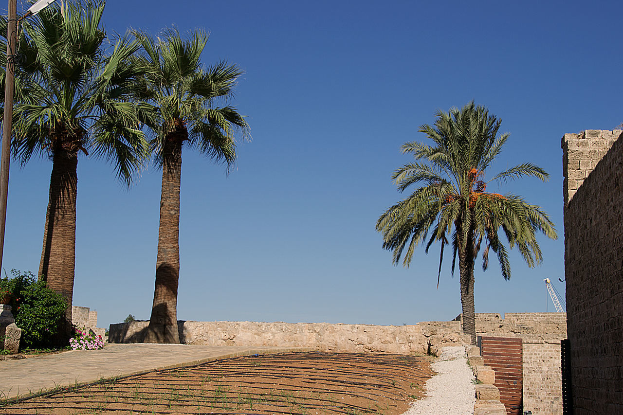 Ancient Blue Clear Sky Day Famagusta Mentioned By Shakespeare No People Northern Cyprus Outdoors Palm Tree Sky Tree View To Othello Cas