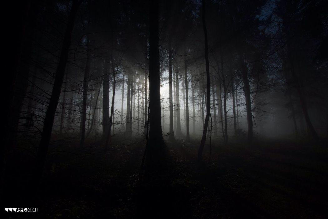 The Dark Forest At Dark Forest Forest Hugging A Tree Im Dunkeln Wald Nebelwald Killwangen Nature Wald Fotografieren Im Wald