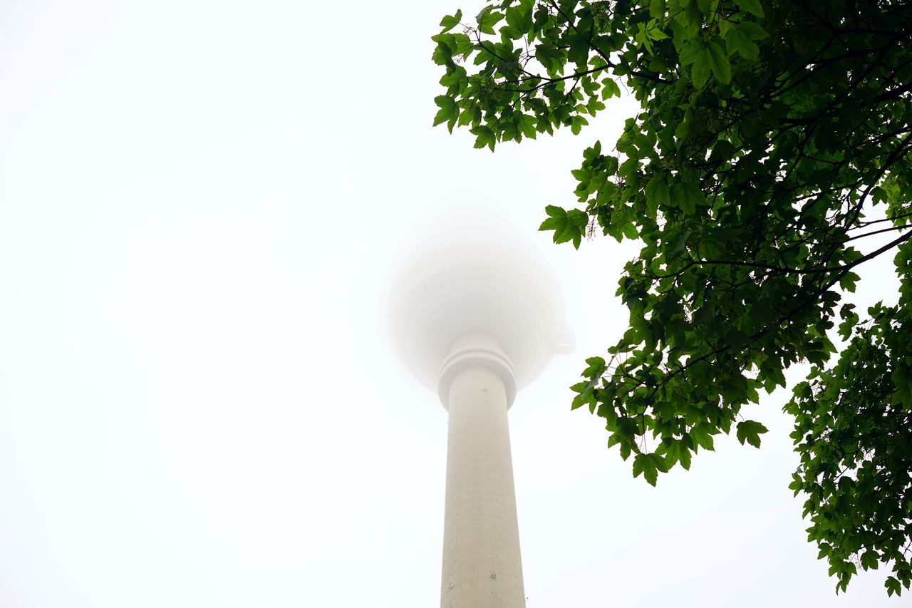 Low Angle View Tree Architecture Built Structure Travel Destinations Outdoors Day No People Building Exterior Sky Nature City Foggy Morning Berlin Nature In The City Fog Green Beauty In Nature Cityscape Fernsehturm Copy Space