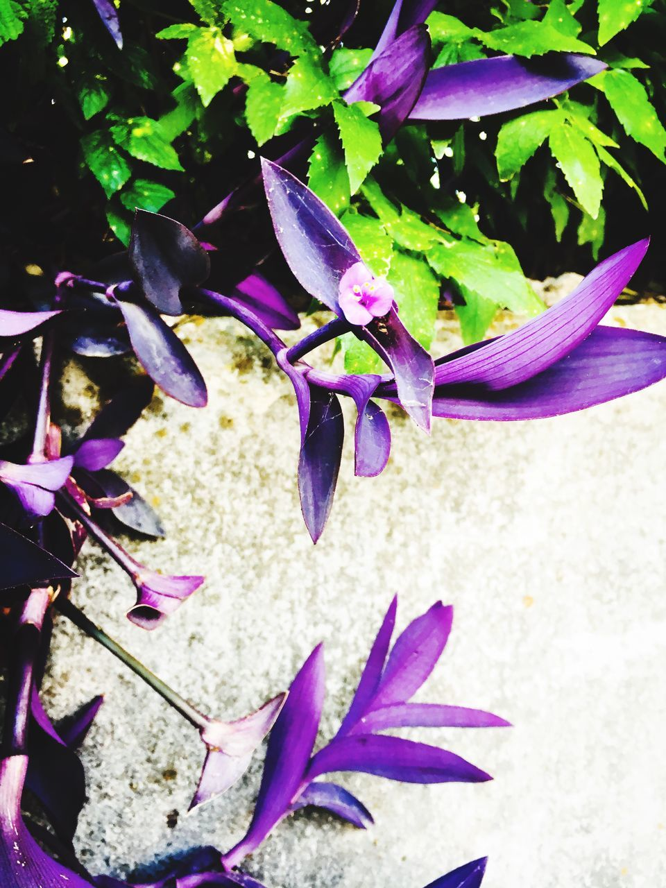 flower, petal, growth, nature, plant, fragility, leaf, purple, beauty in nature, outdoors, no people, day, close-up, flower head, freshness