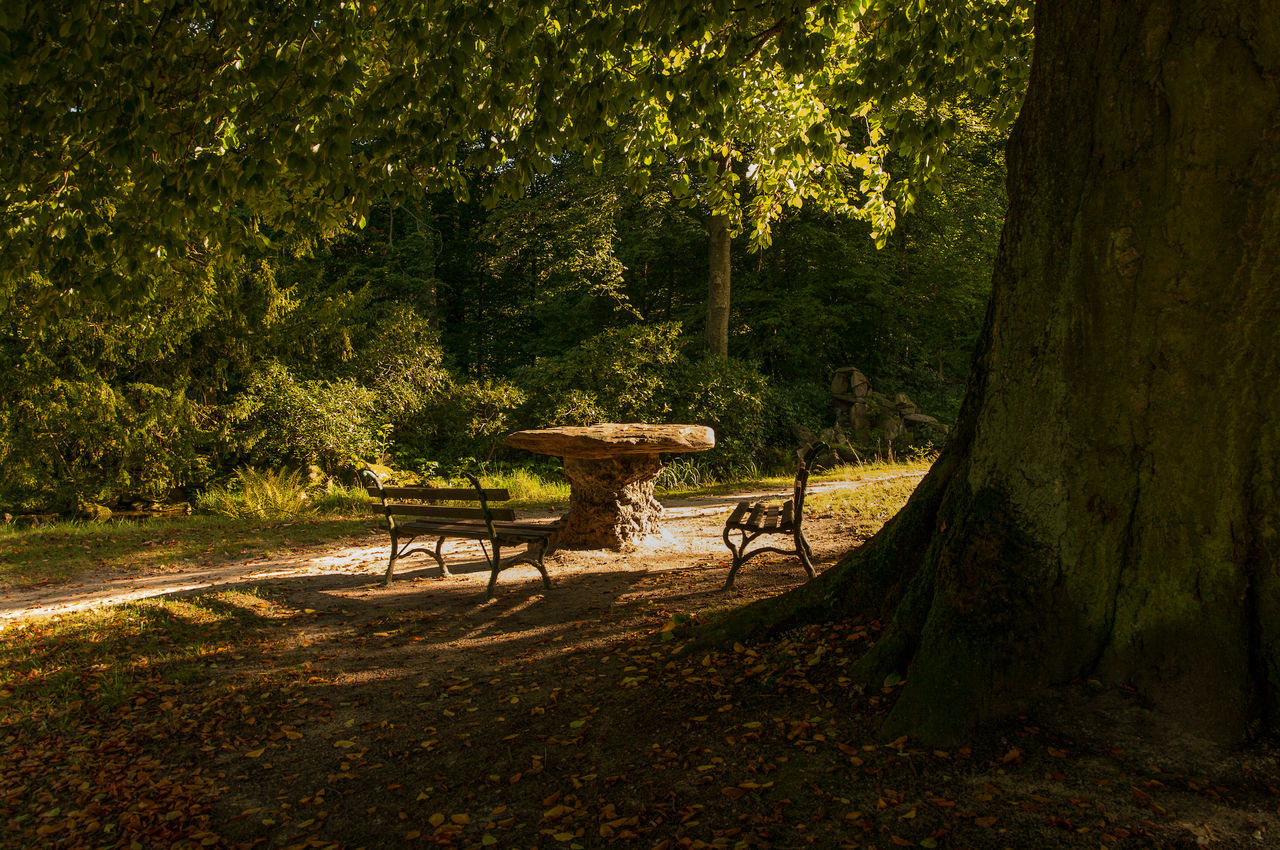 light and shadow Beautiful Light Beauty In Nature Branch Leaf Leaves Light Light And Shadow Lights Nature Nature Outdoors Park Pentax Seat Seats Shadow Shadows & Lights Sun Sunlight Sunlight And Shadow Sunset Silhouettes Sunset_collection Sunshine Tree Tree