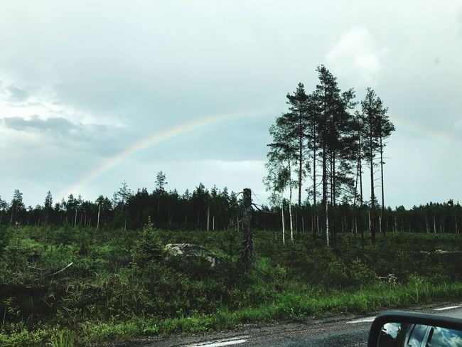 Tree Nature Sky Rainbow Transportation No People Tranquility Tranquil Scene Beauty In Nature Scenics Road Day Forest Outdoors Landscape Growth Cloud - Sky