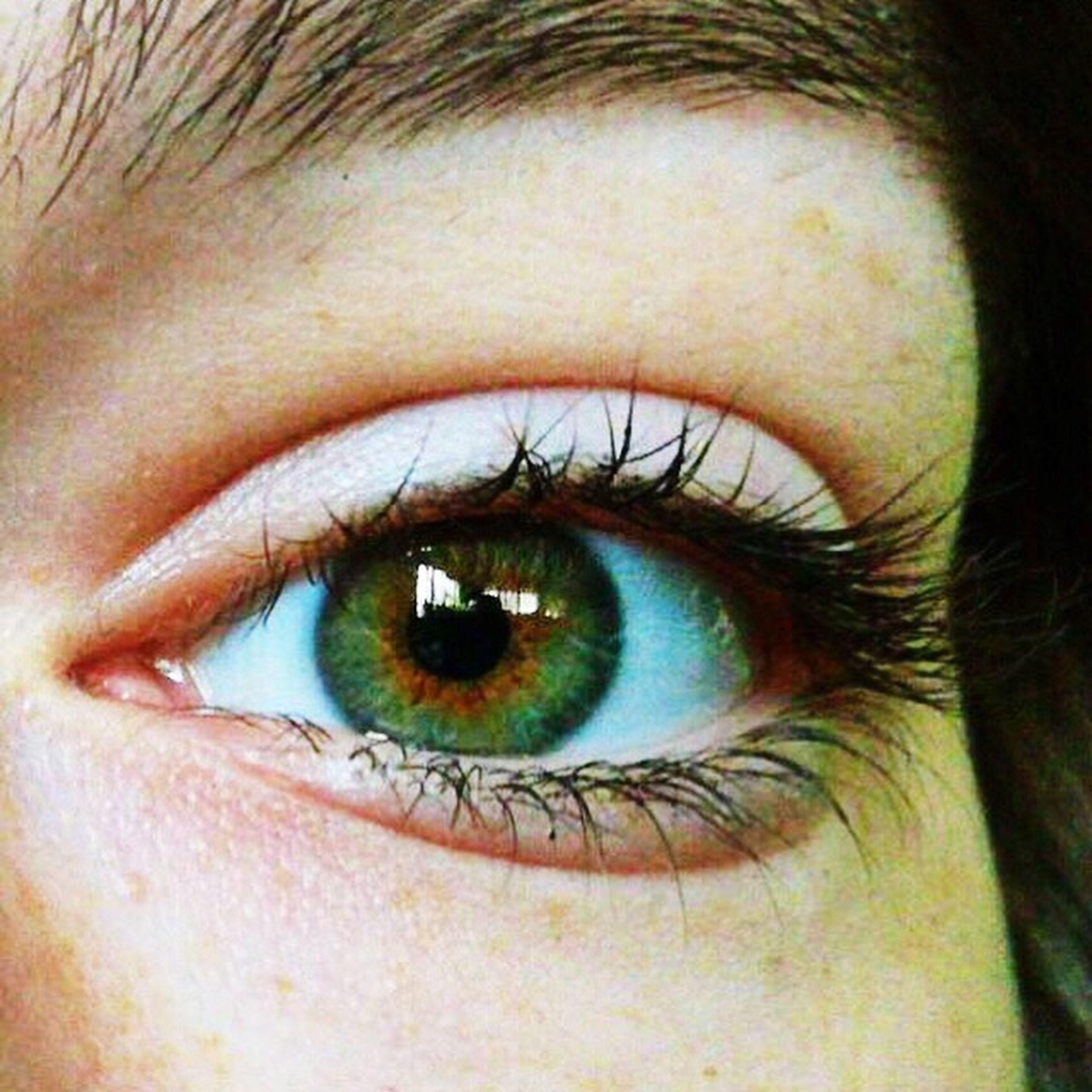 Human Eye Eyelash Looking At Camera Eyeball Close-up Human Body Part Eyebrow Eyesight Iris - Eye One Person Real People Portrait Sensory Perception Indoors  Day Adult People Heterochromia Green Eyes Blue