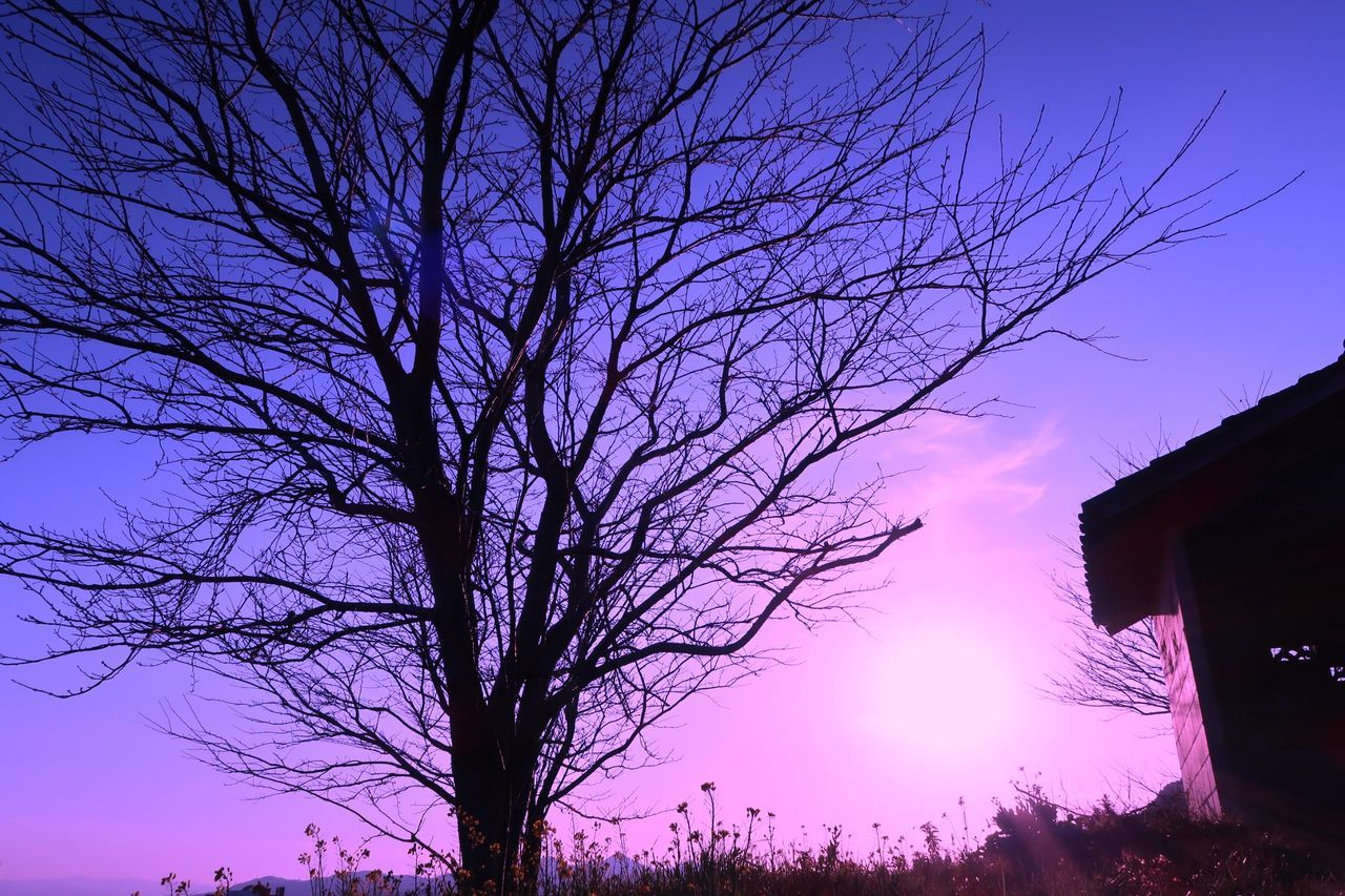 bare tree, tree, branch, silhouette, sky, nature, no people, beauty in nature, low angle view, sunset, outdoors, scenics, built structure, winter, tranquility, clear sky, architecture, building exterior, cold temperature, day