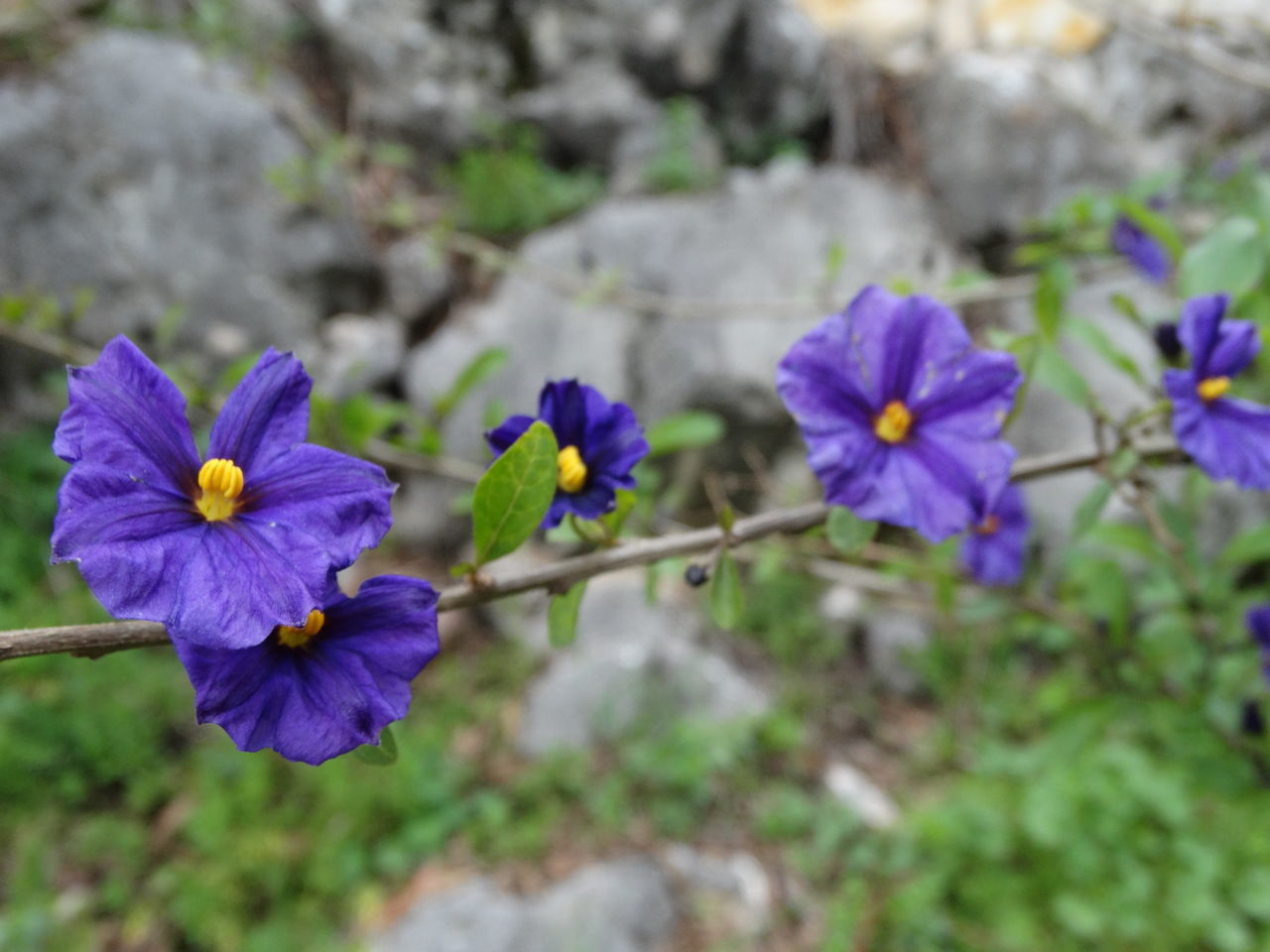 Beauty In Nature Blooming Close-up Day Flower Flower Head Fragility Freshness Growth Nature No People Outdoors Petal Plant Purple