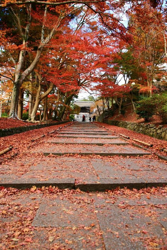 Tree Autumn Leaf Nature Red Outdoors Beauty In Nature Day Maple Leaf Fall Kyoto Japan Autumn 2016 Autumn🍁🍁🍁 Autumn Leaves Canon Tenple Bishamondo ファインダー越しの私の世界 写真撮ってる人と繋がりたい カメラ好きな人と繋がりたい カメラ女子
