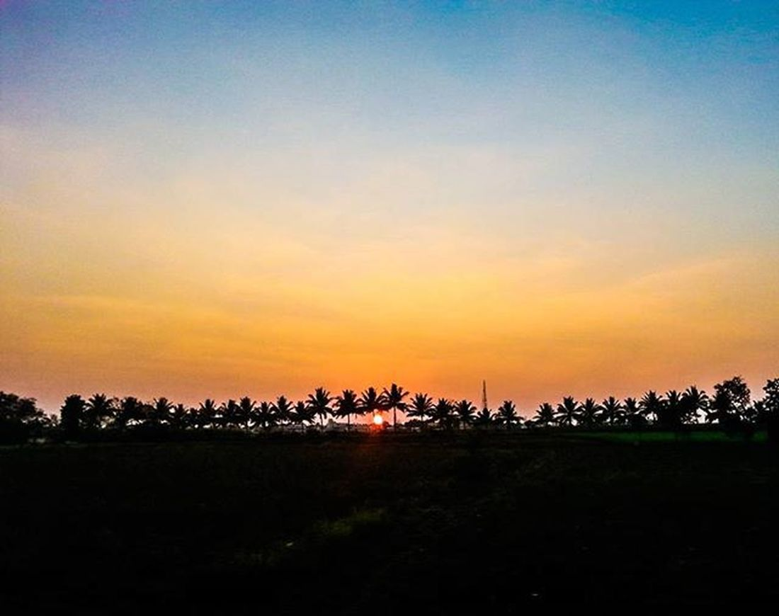 Colorful sunset amongst tall pine trees! Sunset Sky Skyporn Colorsofnature Colorful Beautiful Bluesky Amber Pinetree Pinetrees India South Southindia _soi Instatravel Travel Trainjourney Colorsofindia Tamilnadu 2015  Silhouette Travel Traveljournal Pixelpanda_india Incredibleindia indiapictures