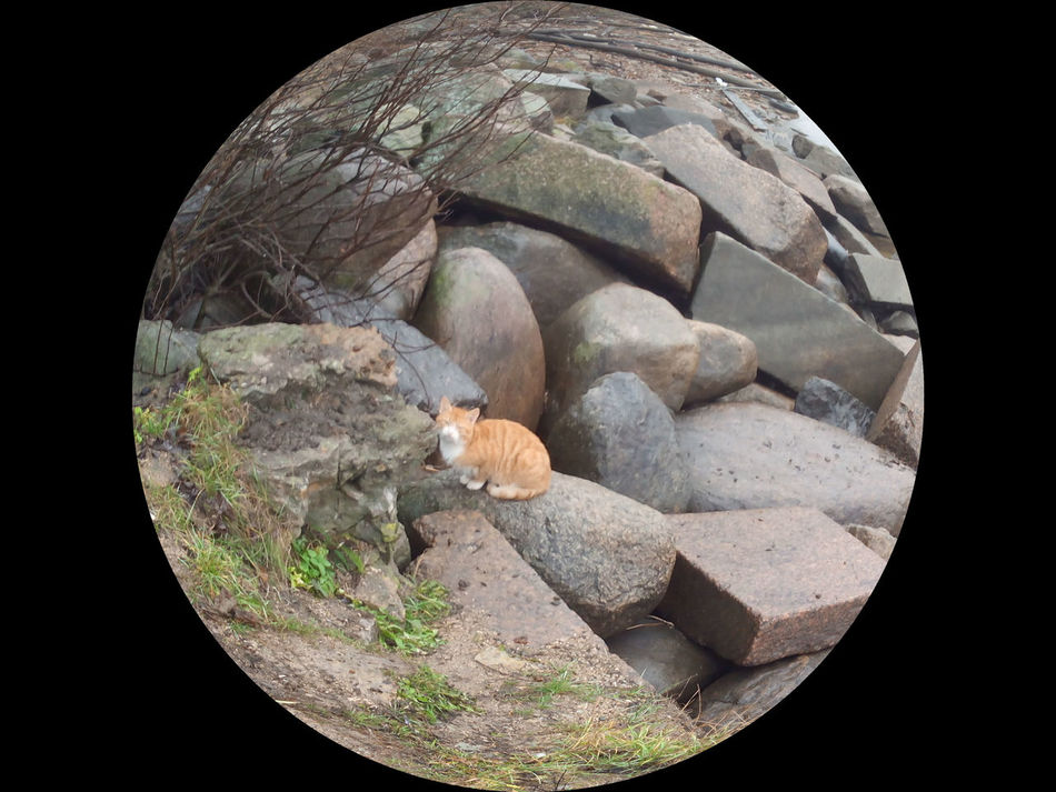 Суровые шлиссельбургские котейки. Рыжий пират)