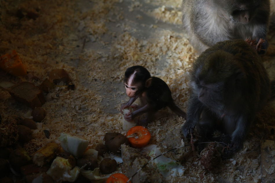 Animal Themes Animals In The Wild Baby Monkey Baby Monkeys Day Eating Family Mammal Meal Mealtime Monkey No People Outdoors Togetherness Zoo