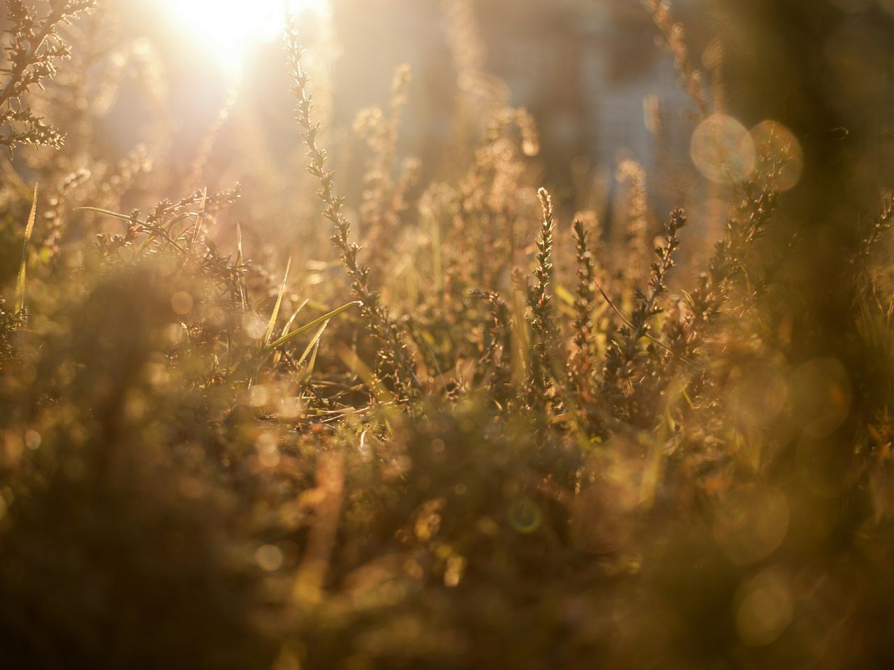 Beautiful stock photos of sunshine, Day, Field, Green Color, Growth