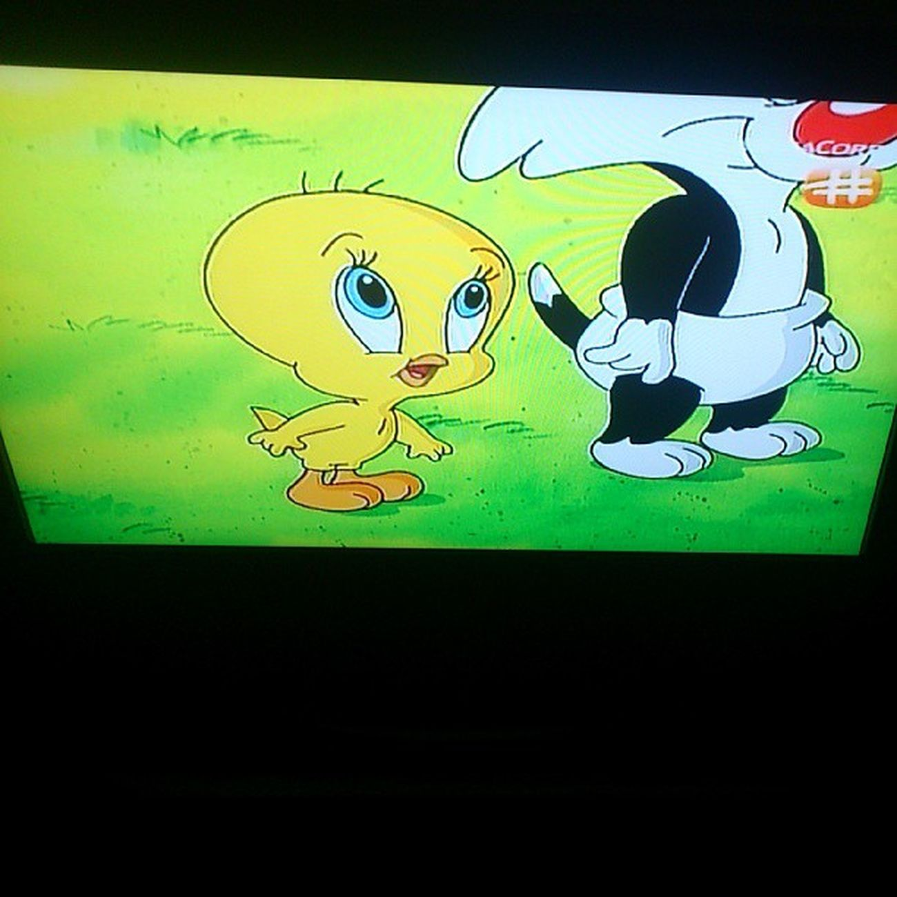 Ol' time fav. BabyLooneyTunes well,in my opinion,cartoon doesn't matter if you're old or young :)