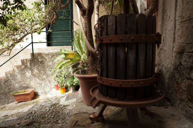 Narrow way Absence Architecture Built Structure Cervo Ligure Chair Closed Day Empty EyeEm Best Shots EyeEm Nature Lover Front Or Back Yard Furniture Growth Italy Narrow Street Narrow Way Narrowpath No People Old Old Town Outdoors Plant Seat Wines Winter
