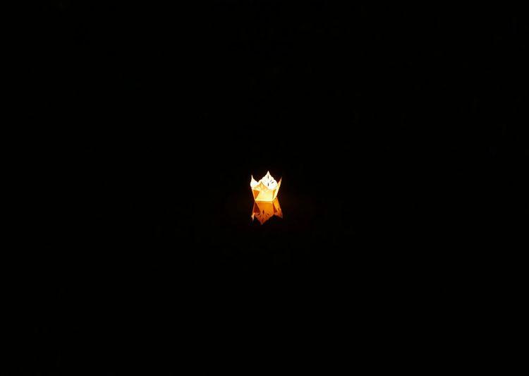 Night No People Burning Black Background Illuminated Animal Themes Close-up Outdoors