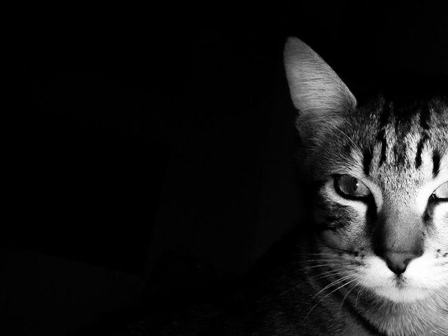 Light And Shadow Blackandwhite Dark Black And White Cat