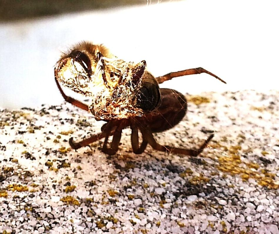 Hello World Taking Photos Hanging Out Nationalgeographic Smart Simplicity Open Edit For Everyone Nature Photography Estepona Hanging Out Spinne Und Biene Smartphone Photography National Geographic Insect Photography Fotography