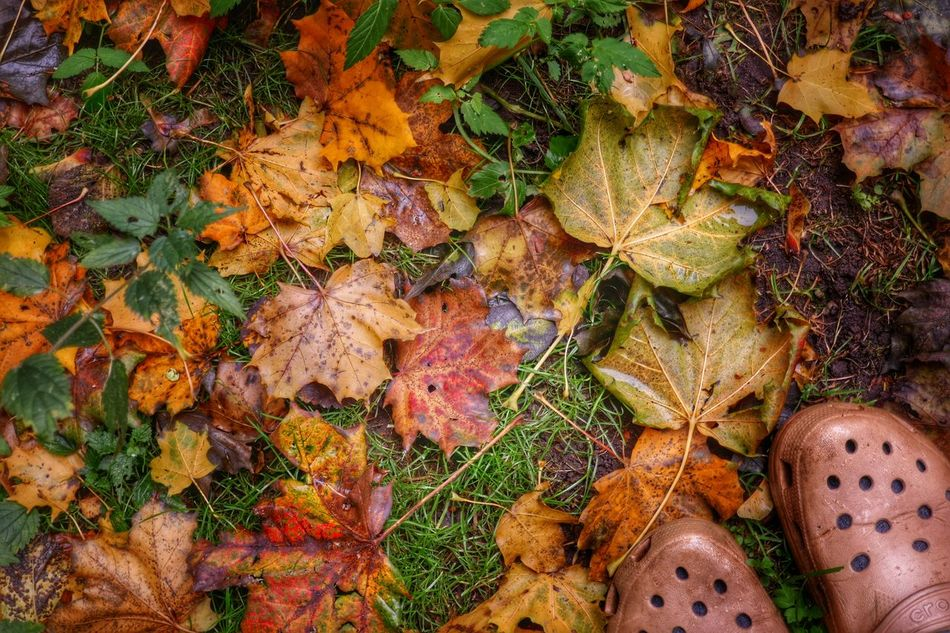 Leaves🌿 Autumn🍁🍁🍁 Nature Close-up Garden Shoes Autumn Beauty In Nature Outdoors Pattern Taking Photos Nature Nature On Your Doorstep EyeEm Nature Lover Moment From My Point Of View StillLifePhotography