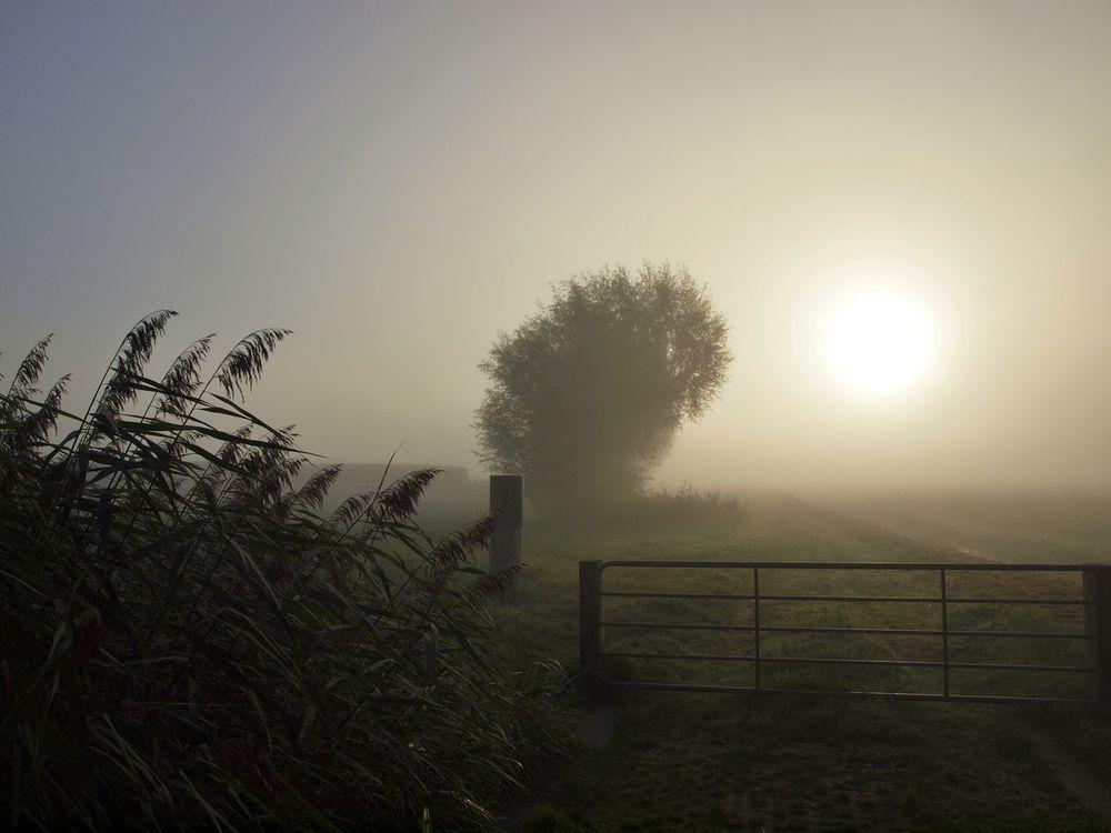 050 Sunrise Misty Morning Mist Farmland Tree