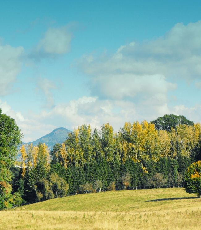 An Autumn day... Hills Trees Park Welshpool Fall Landscape осень деревья холмы парк