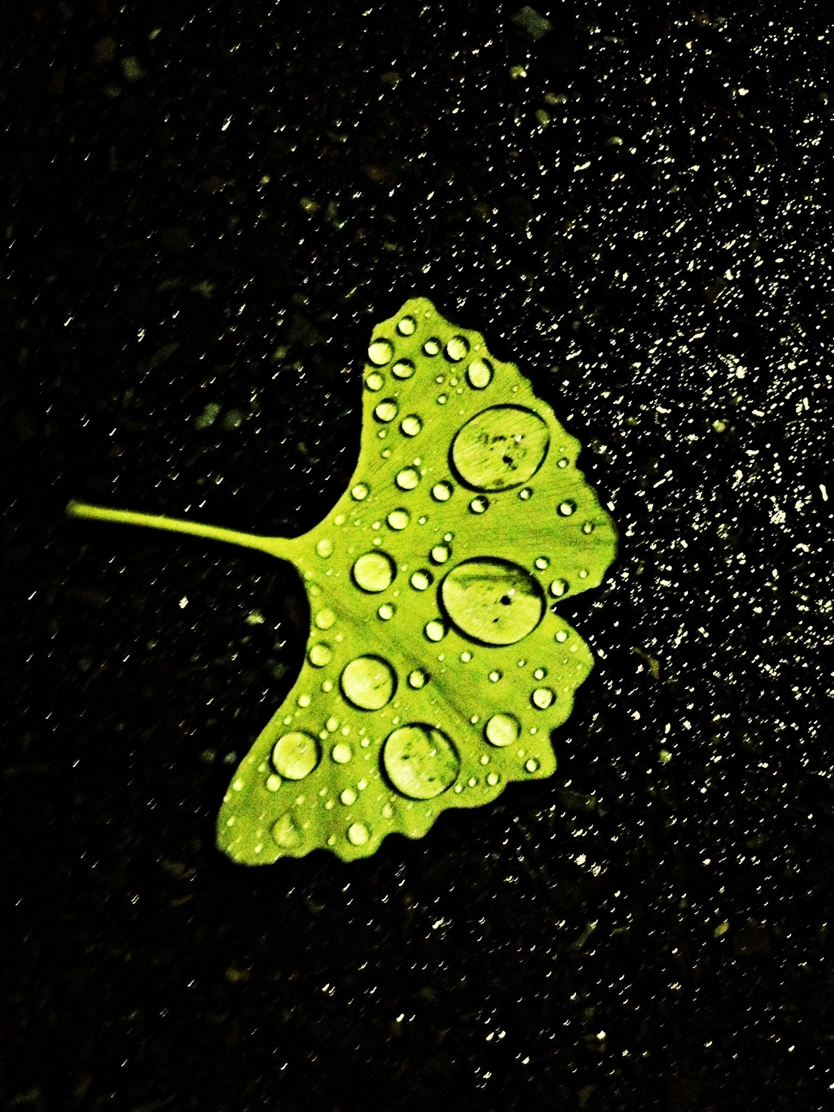 drop, wet, water, leaf, raindrop, rain, dew, close-up, green color, droplet, freshness, night, fragility, water drop, nature, beauty in nature, purity, growth, leaf vein, season