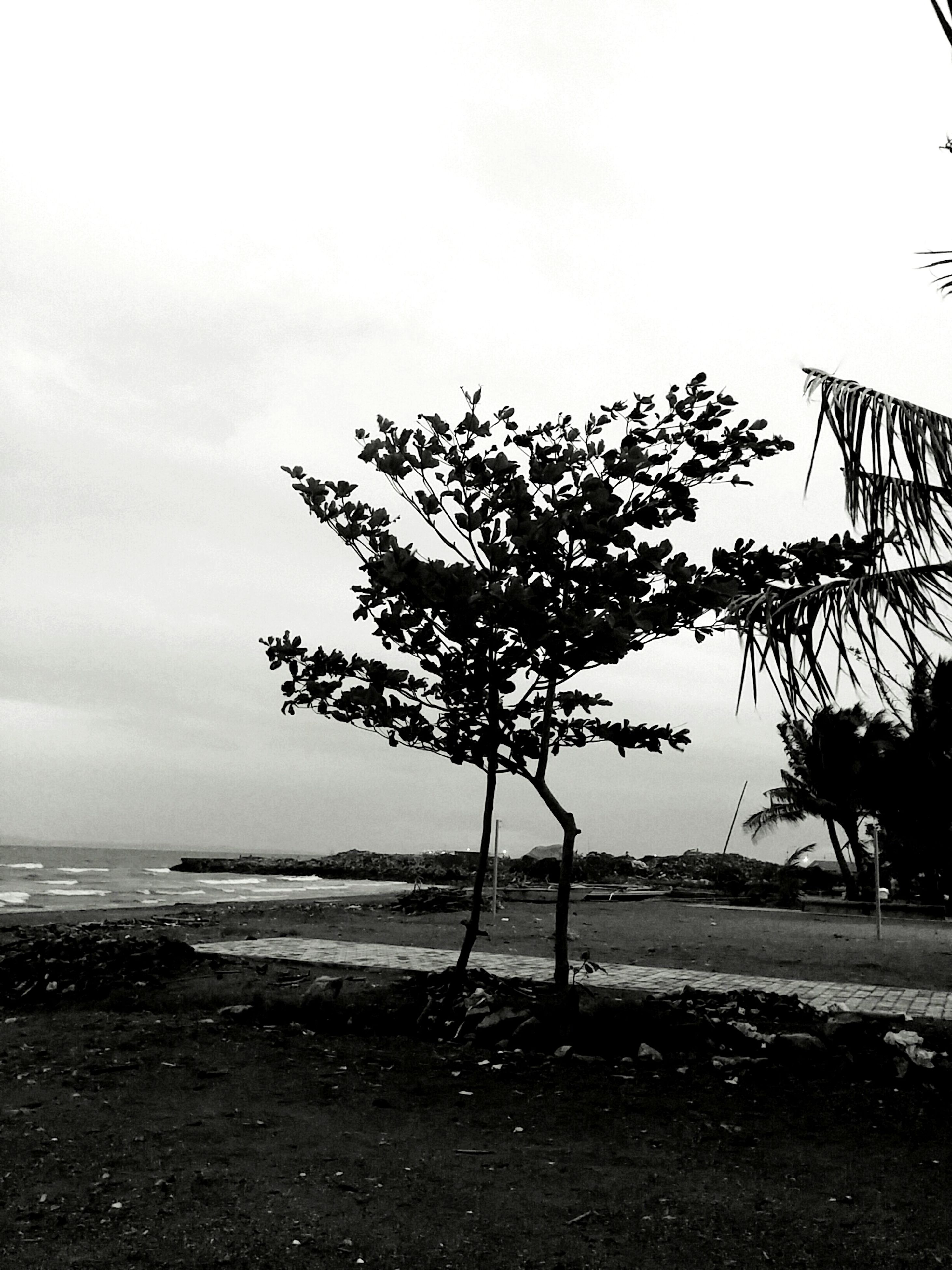 sea, tree, nature, beach, beauty in nature, water, tranquility, tranquil scene, scenics, horizon over water, growth, no people, idyllic, sky, outdoors, day, single tree