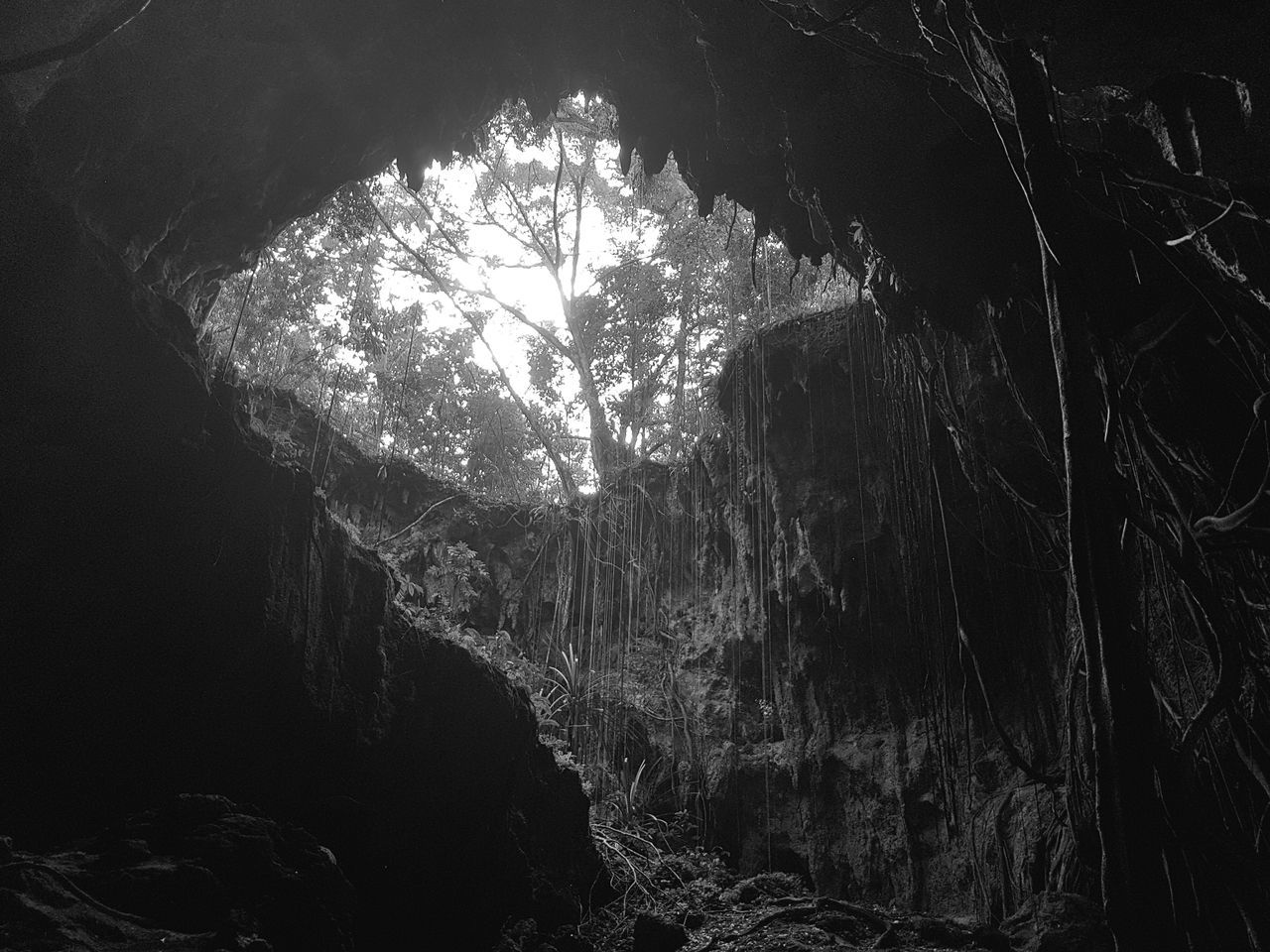 Cave Tree Forest Silhouette Nature No People Biak Papua Indonesia