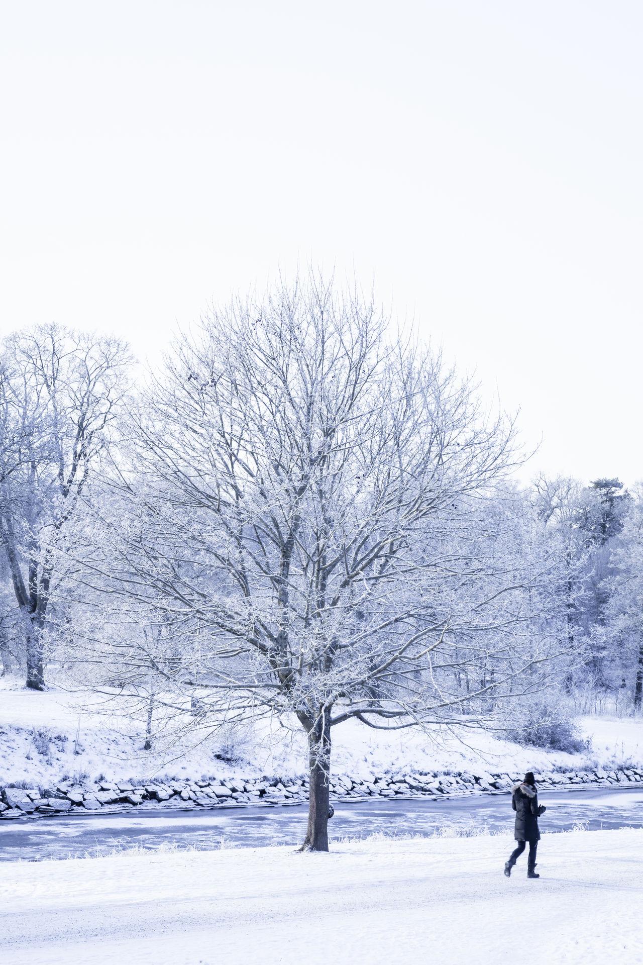 Winter in the North Djurgården Europe Nordic Countries Park Riverside Scandinavia Snow Snow ❄ Stockholm Sweden Trees