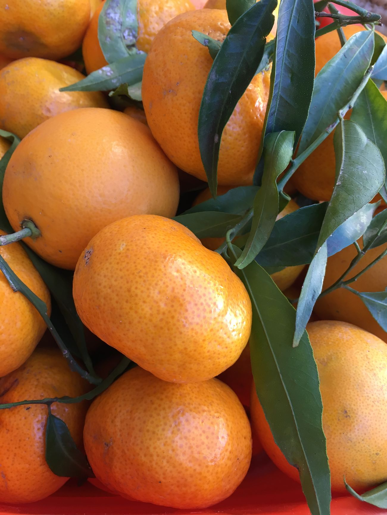 ReggioCalabria Food Calabria Mandarini Natale