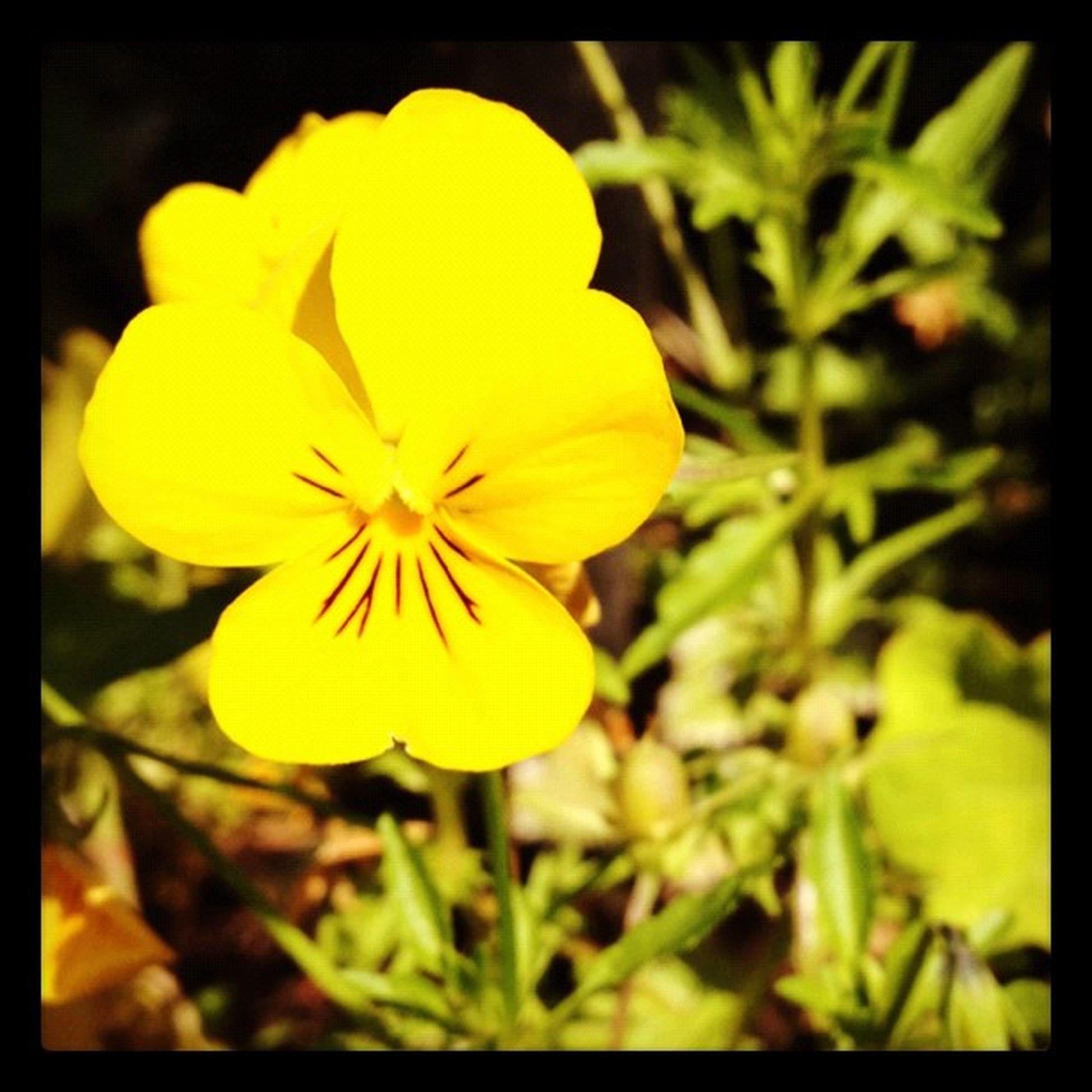 Photooftheday InstaCC Instaccplaywithphotosd5 Macro_power_hour