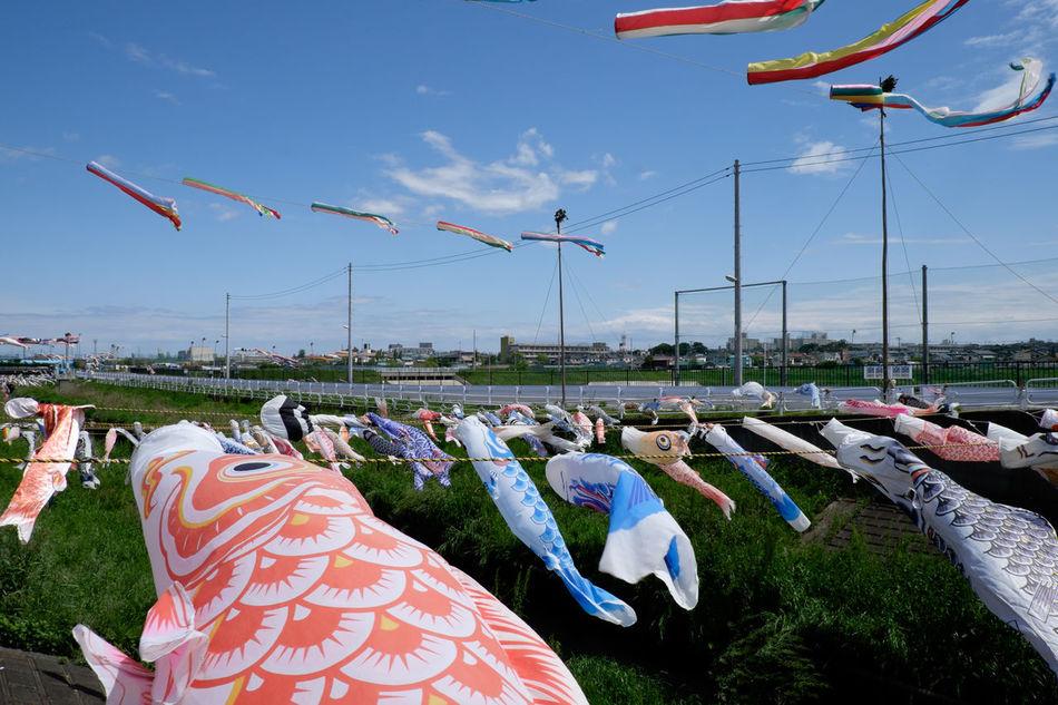 市川国分川の鯉のぼり Carp Streamers Carp Streamer Fujifilm Fujifilm X-E2 Fujifilm_xseries Japan Japan Photography Japanese Culture Outdoors XF18-55mm 国分川 子供の日 市川 市川市 日本 鯉のぼり