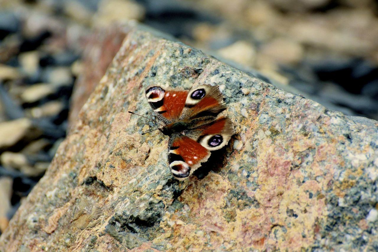 Butterfly Close-up Day Detail Deterioration Focus On Foreground Ground Natural Pattern Nature No People Outdoors Papillion Selective Focus Stone Warm Hello World Helloworld EyeEm Nature Lover EyeEm Best Shots - Nature