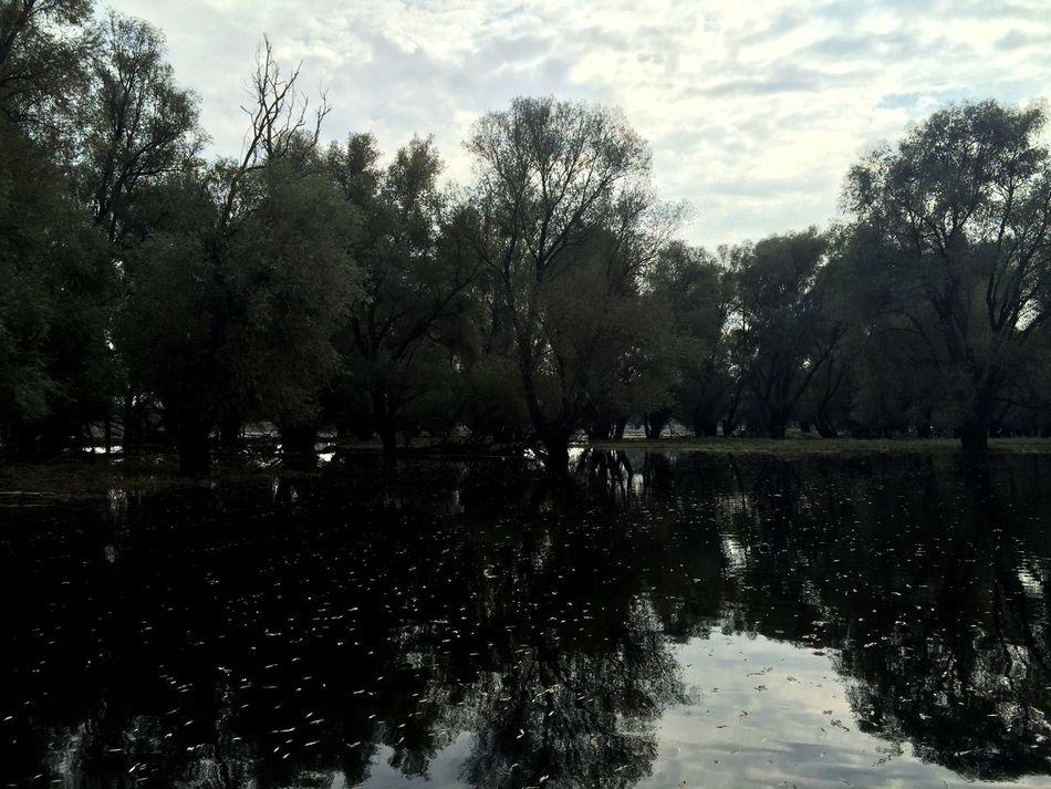 Tree Water Nature Reflection Kopački Rit