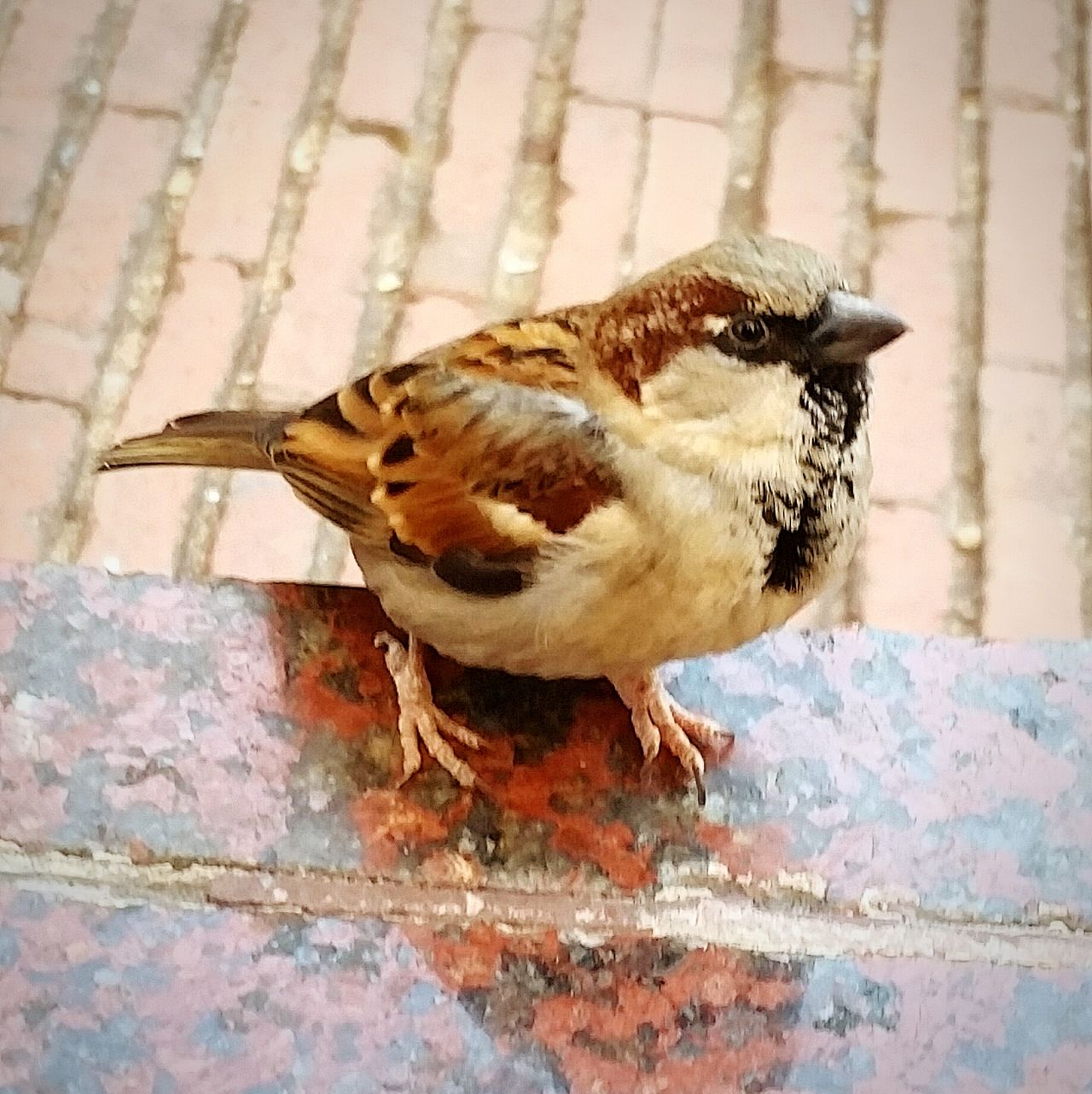Animal Themes One Animal Animals In The Wild Bird High Angle View Animal Wildlife Outdoors No People Day Nature Sparrow Close-up Beauty In Nature Mammal Barcelona♡♥♡♥♡ Barcelona Streets