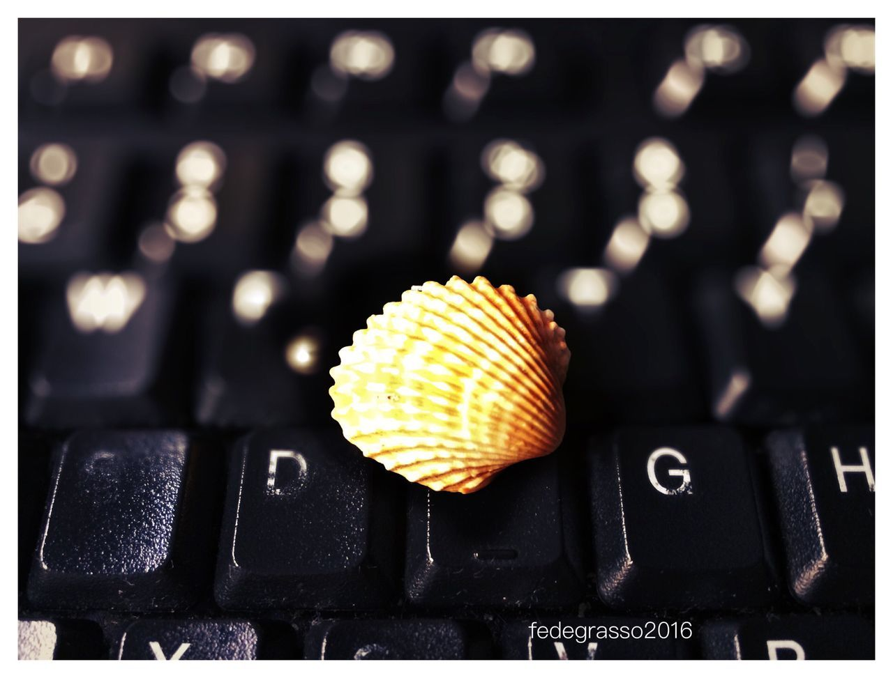 Shell Shells🐚 Conchiglie Marine Conchiglie