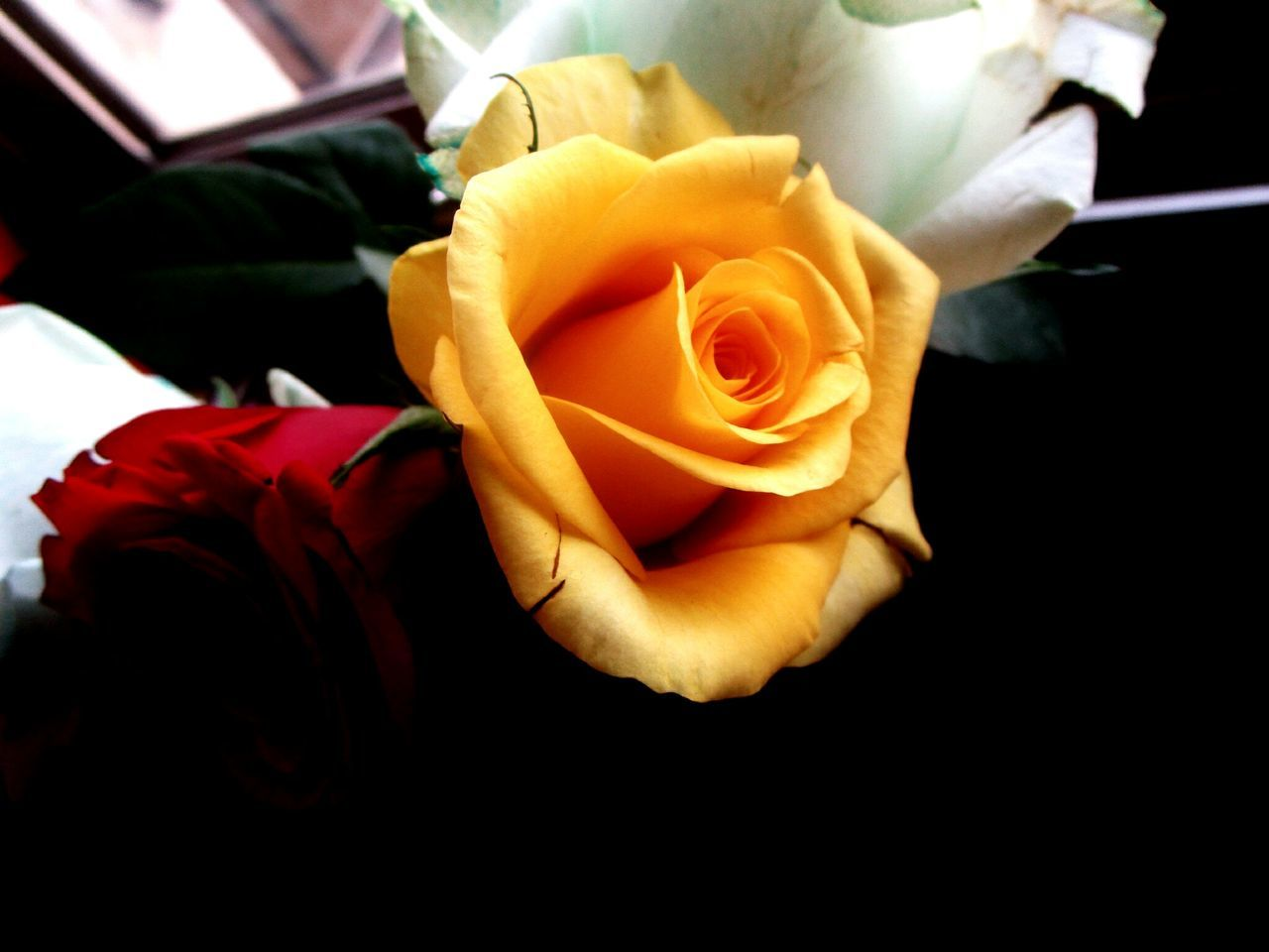 Yellow Rose Beauty In Nature Nature_collection