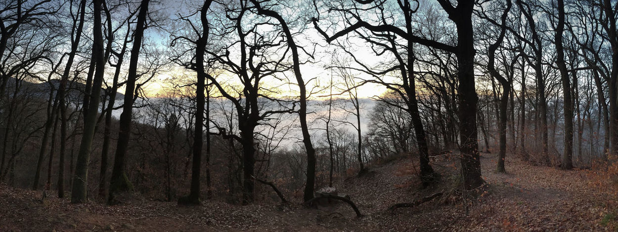 Misty Trees Winter Bare Tree Beauty In Nature Branch Cold Temperature Dusk Fog Forest Landscape Nature Nightfall No People Outdoors Scenics Sky Tranquil Scene Tranquility Tree Tree Trunk Winter