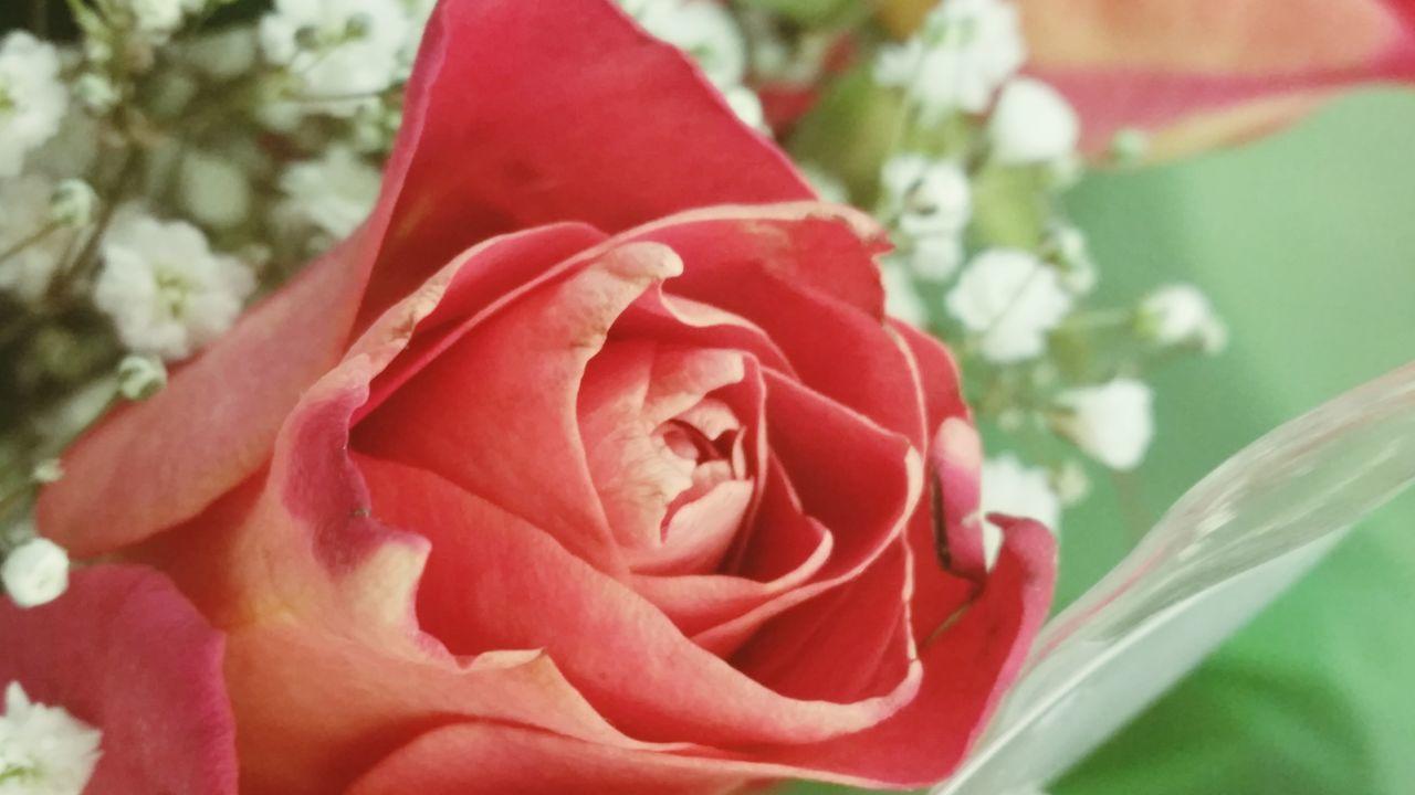 Perspective Flowerporn Orange Delicate Petals EyeEm Nature Lover Rosé Intricate Nature