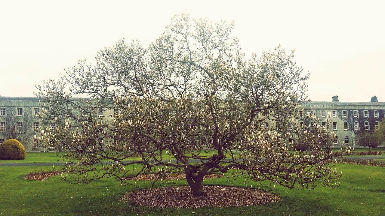 Trees Magnolia_Blossom Architecture Springtime
