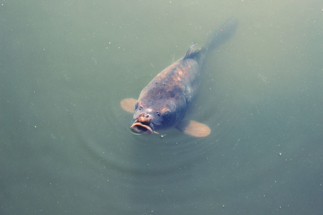 Fish Water Water_collection Hungry Mouth Nature Nature On Your Doorstep Palmengarten Frankfurt Nature_collection Animals Animal Animal Themes Animal Photography Showcase March Animal_collection Look Looking At Camera Lookingup Photography Photooftheday