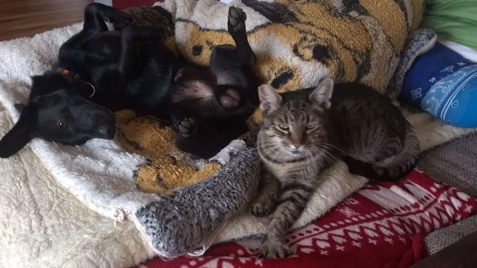 That's Relaxing. Ha,ha,ha Relaxing Cat And Dog