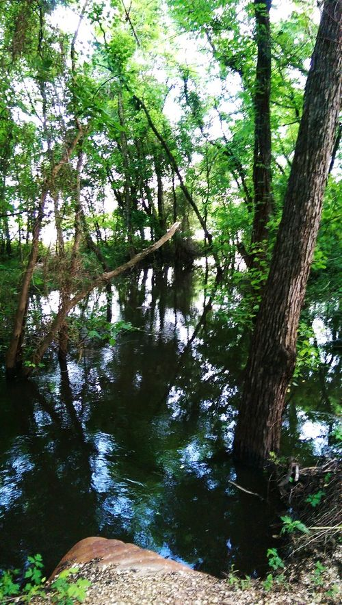 Nature Outdoors Trees Water Reflection Flooded Texas Evening Walk Ripples
