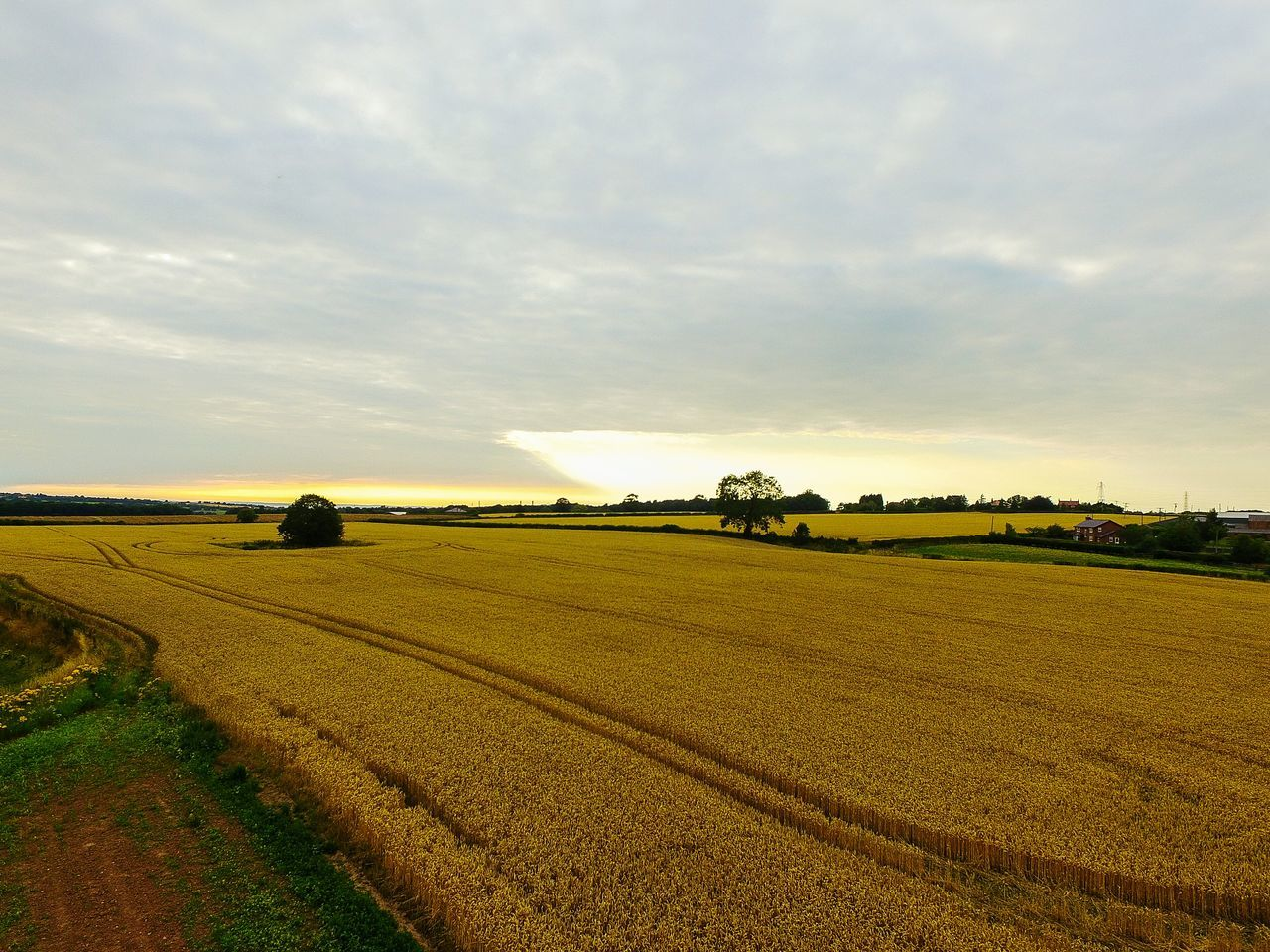 Golden Field Corn Field Sky And Clouds Harvest Time Tree Tracks @ Aston Cheshire